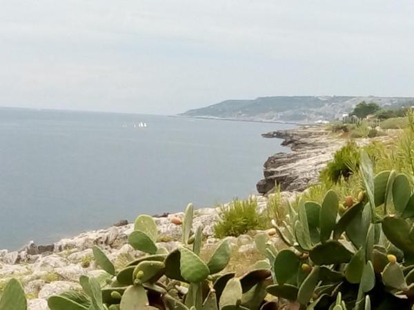 vista del mare e della costa pugliese con tipica vegetazione con fichi d'India