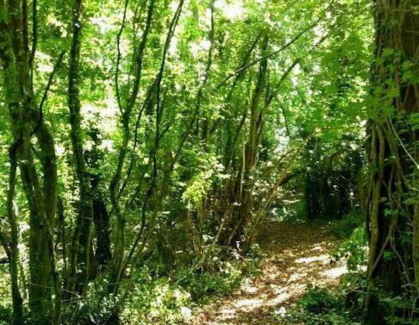 bosco di casacalenda