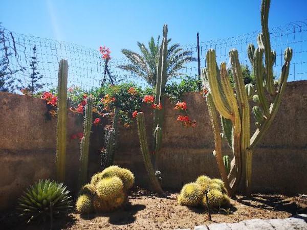 aiuola con cactus e piante mediterranee