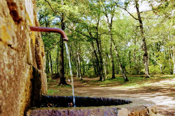 fontana con acqua che scorre immersa nel bosco