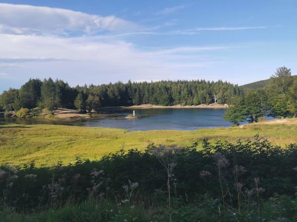 lago di calamone circondato dal verde